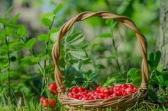 Frutos da floresta (bagas) na cesta Imagem de Stock Royalty Free