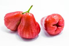 Frutos da maçã de Rosa imagens de stock royalty free