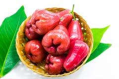 Frutos da maçã de Rosa imagem de stock