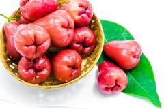 Frutos da maçã de Rosa fotografia de stock