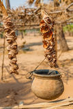 Frutos da palma Foto de Stock