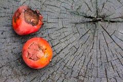 Frutos da palma de cera da selagem na madeira imagens de stock