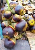 Frutos da palma de Palmyra Imagem de Stock Royalty Free