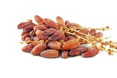 Frutos da tâmara Imagem de Stock