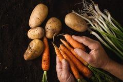 Frutos da terra Imagem de Stock