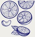Frutos das laranjas com folhas e fatias verdes Foto de Stock Royalty Free