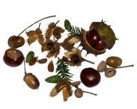 Frutos de árvore da floresta Foto de Stock Royalty Free