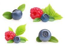 Frutos de baga do verão Fotos de Stock