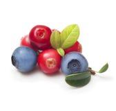 Frutos de baga selvagens isolados Fotografia de Stock