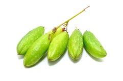 Frutos de Bilimbi imagem de stock royalty free