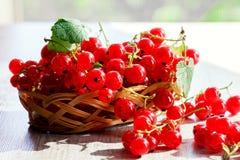 Frutos de corintos vermelhos Fotografia de Stock Royalty Free