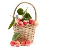 Frutos do espinho de Karanda, de Carunda ou de Cristo com a folha na cesta no fundo branco imagem de stock