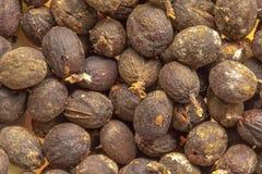 Frutos do feijão de café no shell Fotografia de Stock Royalty Free