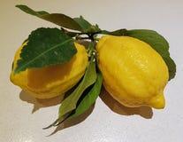 Frutos do limão imagens de stock