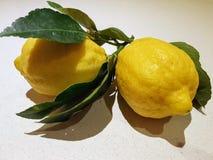Frutos do limão imagem de stock royalty free