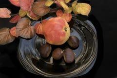 Frutos do outono Fotos de Stock