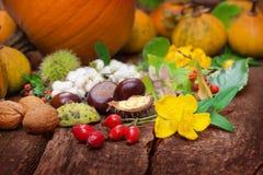 Frutos do outono, ação de graças Fotos de Stock