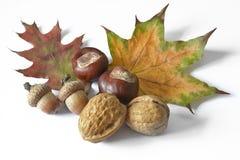 Frutos do outono em um fundo branco Fotos de Stock Royalty Free