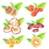 Frutos & folhas secos ajustados ilustração stock