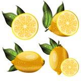 Frutos frescos do limão, coleção Fotografia de Stock Royalty Free