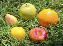 Frutos maduros na grama verde fotografia de stock