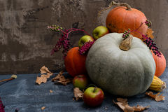 Frutos, milho e abóboras Imagem de Stock