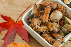 Frutos orgânicos do outono - alimento do vegetariano Imagens de Stock