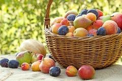 Frutos orgânicos frescos Imagem de Stock Royalty Free
