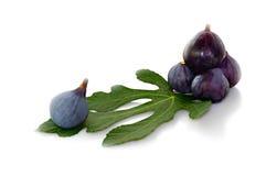 Frutos pretos na folha de figo Fotos de Stock