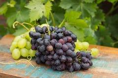 Frutos saudáveis vermelhos e uvas para vinho brancas no vinhedo, g escuro Foto de Stock Royalty Free