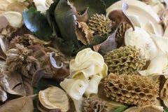 Frutos secados da floresta fotografia de stock
