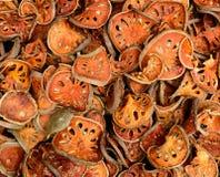 Frutos secados do bael Imagem de Stock Royalty Free
