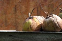 Frutos secos exóticos grandes contra una pared del marrón del moho Fotos de archivo