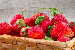 Frutos vermelhos brilhantes maduros das morangos do jardim Grandes morangos suculentas na cesta de vime no fundo das telas de ser Fotografia de Stock