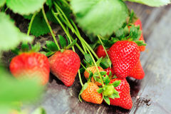 Frutos vermelhos da morango imagem de stock