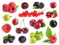 Frutta Accumulazione delle bacche Fotografia Stock