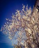Frutta-albero in fioritura sui precedenti del cielo con effetto di scenetta Fotografie Stock