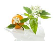 Arancia e fiore Fotografie Stock