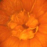 Frutta arancione Fotografia Stock