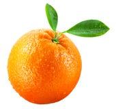 Frutta arancione bagnata con i fogli isolati su bianco Immagini Stock Libere da Diritti