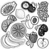 frutta in bianco e nero quadrata del fondo Immagine Stock