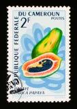 Frutta carica papaya della papaia, circa 1967 Immagini Stock Libere da Diritti