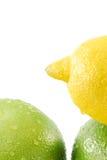 Frutta citrica Fotografie Stock Libere da Diritti
