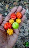 Frutta Colourful a disposizione fotografia stock libera da diritti