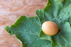 Frutta con l'arancia dolce Ritrovamento in Asia fotografie stock libere da diritti