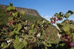 Frutta con la montagna nei precedenti Fotografie Stock Libere da Diritti