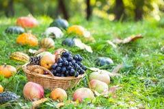 Frutta con le zucche, le zucche e le zucche Fotografia Stock