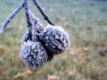 Frutta congelata #03 Immagini Stock