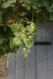 Frutta d'attaccatura bassa Fotografia Stock