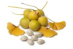 Frutta, dadi e foglie del ginkgo biloba Fotografia Stock